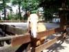 Kobelt-Zoo